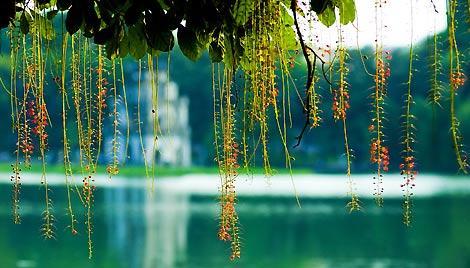 Sword Lake - Hanoi